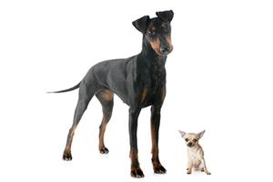 Large Dog Small Dog